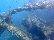 "Love to see so many corals and marine life on shipwrecks! ""Sangat Gunboat"""