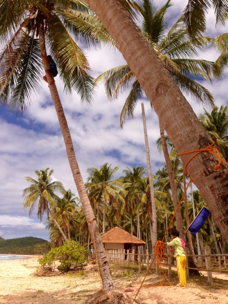 Yes, there's a man in the palm tree there taking down coconuts :)