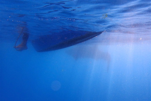 Whale shark under our boat