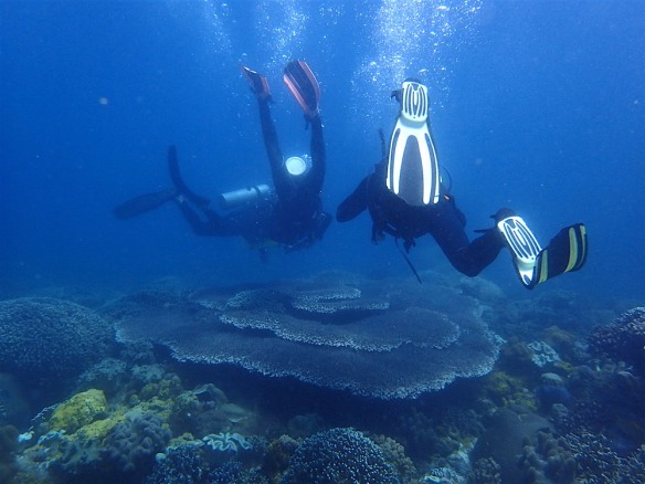 Diving. Love the formation of the coral!