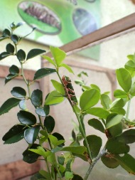 didn't know that different butterfly larvas like different food. so every specie hang out at that kind of plant.