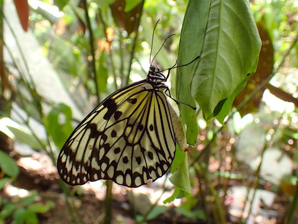 Close up of a butterfly at the sanctuary