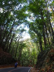 The mahogny man-made forest!
