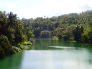 View over the loboc river further up. Peaceful and nature!