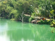 So green here, both the loboc river and the surrounding nature!