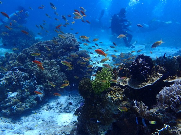 Colorful fishes and corals and great visibility