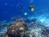 Diving in Balicasag