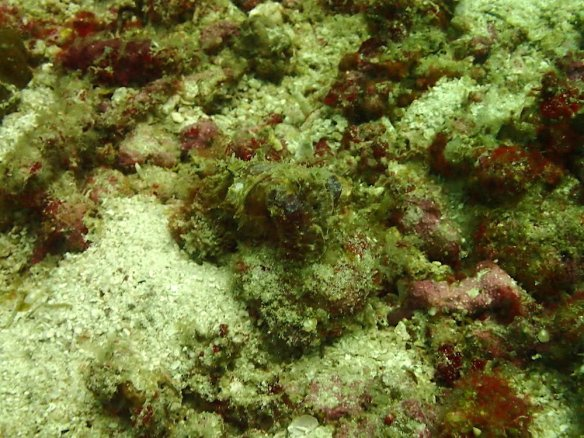 That's a cuttle fish! It's really camouflaged
